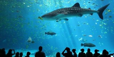 odysseo-le-premier-oceanarium-a-maurice-operationnel-d-rsquo-ici-2020