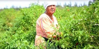 small-farmers-welfare-fund-un-systeme-d-rsquo-assurance-pour-les-petits-planteurs