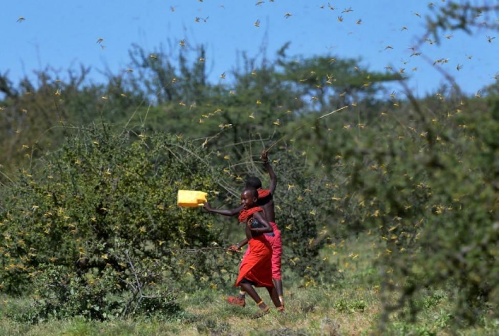 Des jeunes filles frappent des boîtes en essayant d\'éloigner un essaim de friquets près du village de Larisoro, au nord de Nairobi, le 21 janvier 2020.