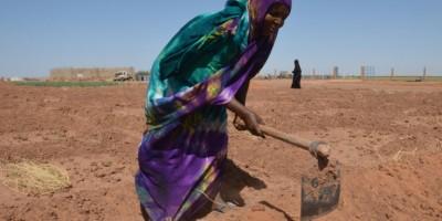 niger-des-eleveurs-touaregs-se-reconvertissent-dans-l-agriculture