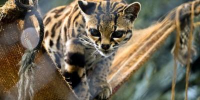 en-colombie-sos-pour-les-animaux-des-zoos-menaces-par-le-confinement