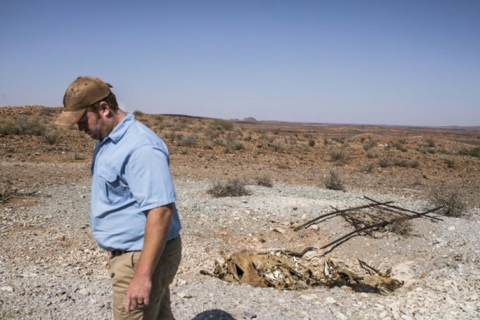 Burger Schoeman près d\'un charnier d\'animaux morts victimes de la sécheresse dans sa réserve du Cap-Nord, en Afrique du Sud