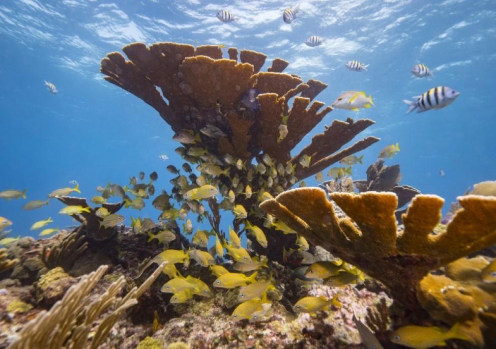 Des coraux au large du Mexique en 2018