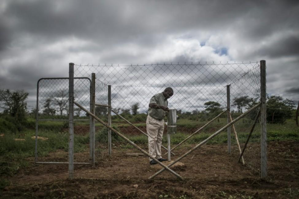 Godfrey Hapaka, agriculteur, consulte son pluviomètre dans sa ferme à Kaumba, le 21 janvier 2020 en Zambie