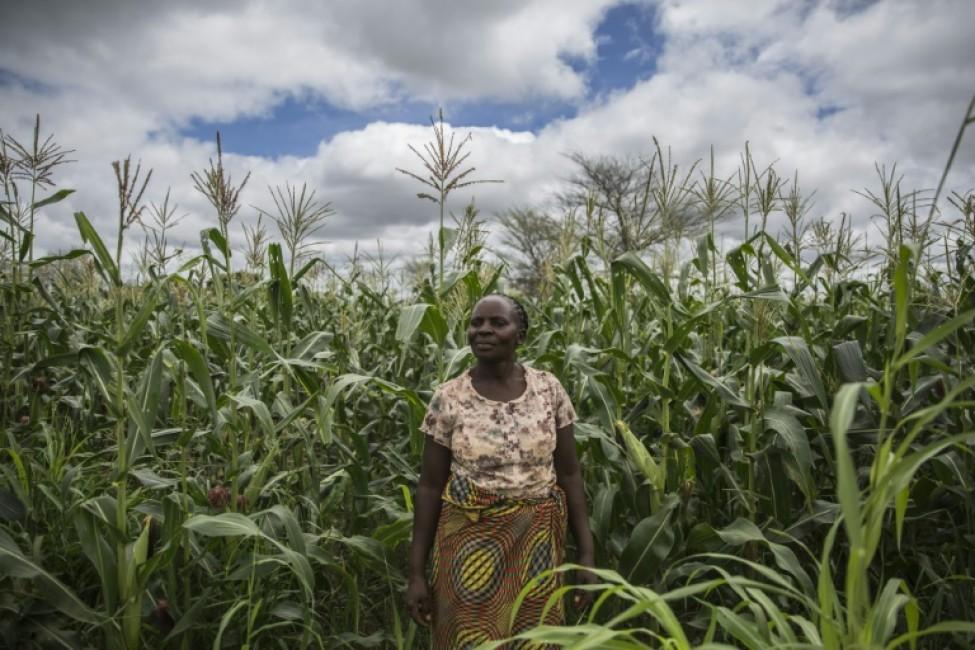 Imelda Hicoombolwa, agricultrice, dans son champ, le 21 janvier 2020 à Kaumba, en Zambie