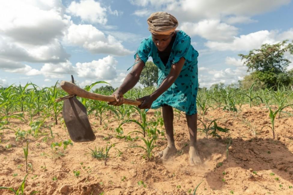 Josephine Ganye travaille dans un champ, le 28 janvier 2020 à Buhera, au Zimbabwe