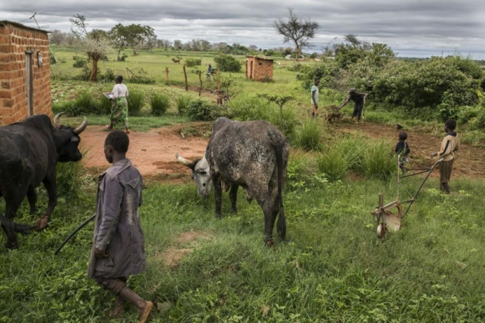 La ferme de Godfrey Hapaka, le 21 janvier 2020 à Kaumba, en Zambie